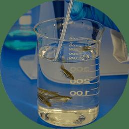 Actividad Zebrafish Lab