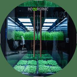 indoorganic actividad