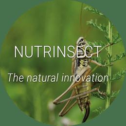 nutrinsect actividad
